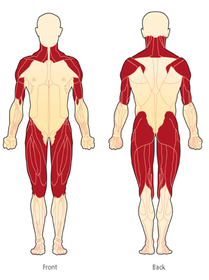 Muscles typically affected by PM/DM