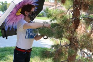 Placing blue ribbon on Bob's tree at Discovery Park, 2nd Annual Myositis Empower Walk